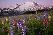 Image of Rainier and Flowers