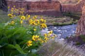 Picture of flowers and the Palouse River