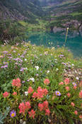 Image of flowers and Stoney Indian Lake in Glacier.