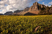 Image of flowers and Logan Pass in Glacier National Park.