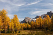 Image of Fall Larches near Floe Lake, Rockwall