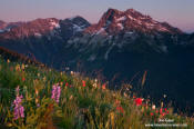 Fortress Mountain and flowers, sunset