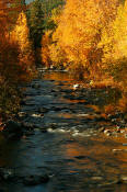 Image of Peshastin Creek in Fall