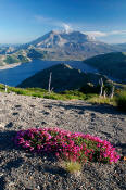Image of Mount St. Helens from Mount Margaret, Spirit Lake