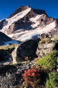 Image of Mount Hood above flowers on Barrett Spur