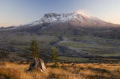 Image of Mount St. Helens from Johnstone Ridge