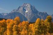 Image of Mount Moran above aspen in autumn, Grand Teton National Park