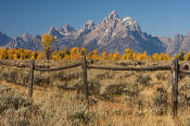 Image of Tetons above autumn colors and fence, Grand Teton National Park