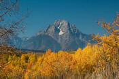 Image of Mount Moran framed in autumn colors, Grand Teton National Park