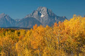 Image of Mount Moran above autumn colors, Oxbow Bend, Grand Teton National Park