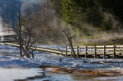 Image of boardwalk at Main Terrace, Mamoth Hot Springs, Yellowstone National Park.