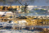 Image of Main Terrace at Mamoth Hot Springs, Yellowstone National Park