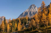 Image of Mount Huber and fall Larch on Opabin Plateau