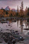 Image of Opabin Fall Reflection, Cathedral Mountain